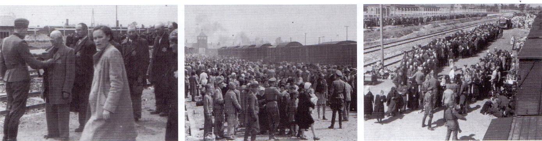 Άφιξη και διαλογή στο Άουσβιτς Αμέσως μετά την άφιξη τους οι άνδρες των SS χώριζαν τους ανθρώπους στην ράμπα σε δύο ομάδες. Οι γέροι άνδρες, οι γυναίκες με παιδιά και οι άρρωστοι οδηγούνταν κατευθείαν στους θαλάμους αερίων που ήταν έτσι διαμορφωμένοι ώστε να μοιάζουν με ντουζιέρες. Όσοι άνδρες και γυναίκες θεωρούνταν ικανοί να δουλέψουν υποχρεώνονταν σε καταναγκαστική εργασία στο στρατόπεδο συγκέντρωσης Auschwitz-Birkenau. Αυτές οι φωτογραφίες απεικονίζουν μια άφιξη Εβραίων από το γκέτο Berehovo που βρίσκεται κοντά στα Καρπάθια στην Ουκρανία στις 26 Μαΐου 1944.