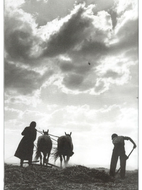 Αλώνισμα με αδοκάνη, Τερψιθέα Λάρισας, 1948
