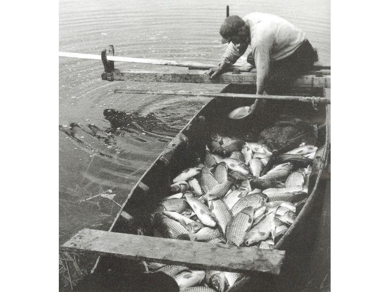 Η ψαριά της ημέρας, Λίμνη Κάρλα, 1953