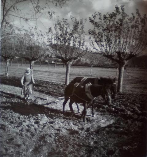 Όργωμα με μουλάρια. Στερεά Ελλάδα, 1947 -50