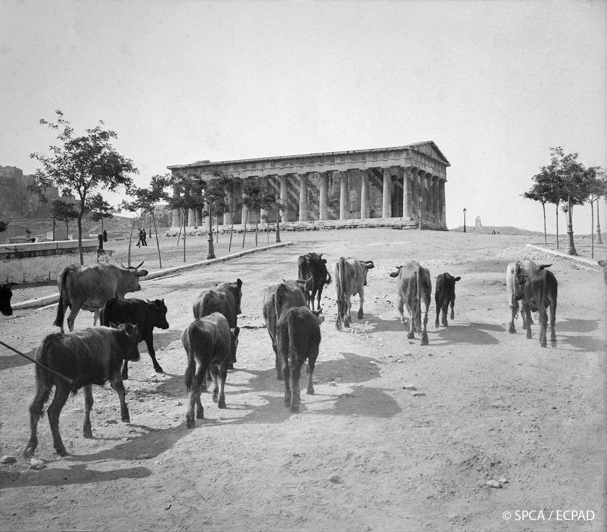 athina-1917 7