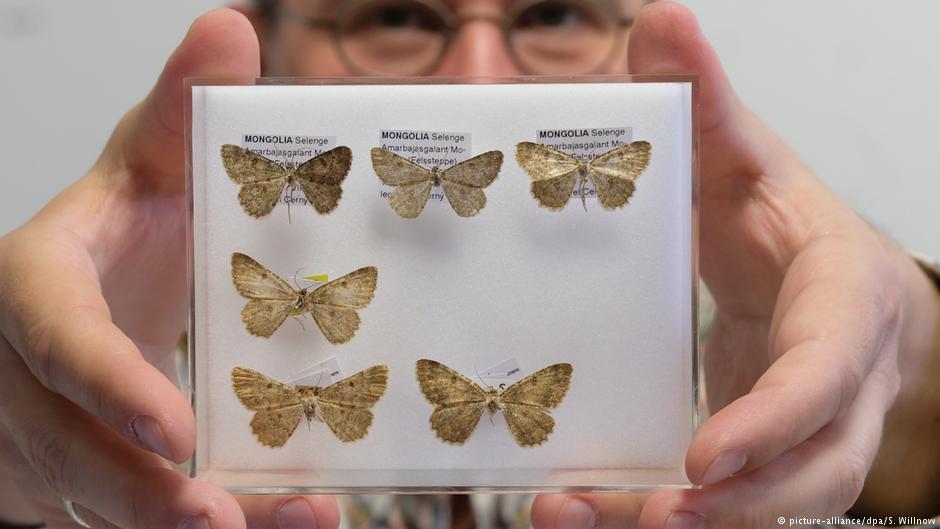 Τα πέντε άγνωστα μέχρι σήμερα είδη πεταλούδας