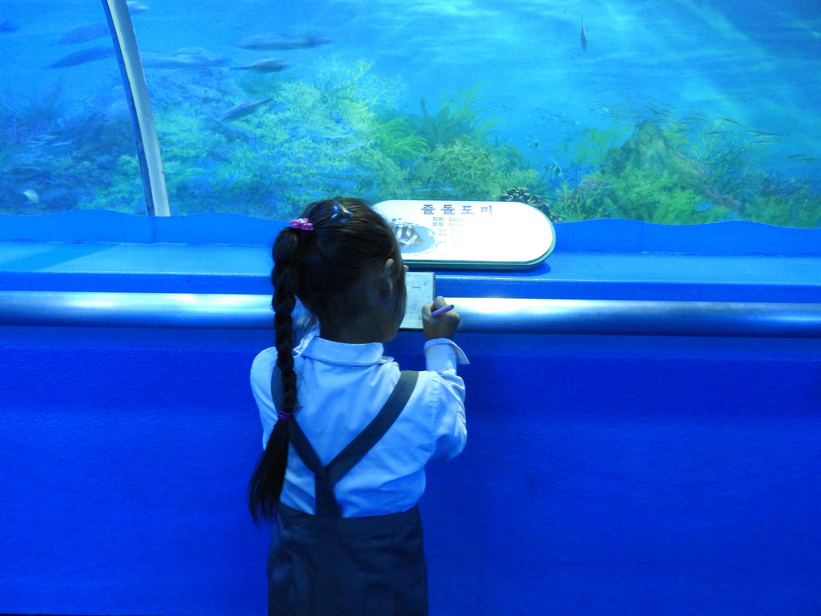 Μαθήτρια του δημοτικού, κατά τη διάρκεια επίσκεψης του σχολείου της στο ενυδρείο του Ζωολογικού Κήπου της Πιονγιάνγκ.