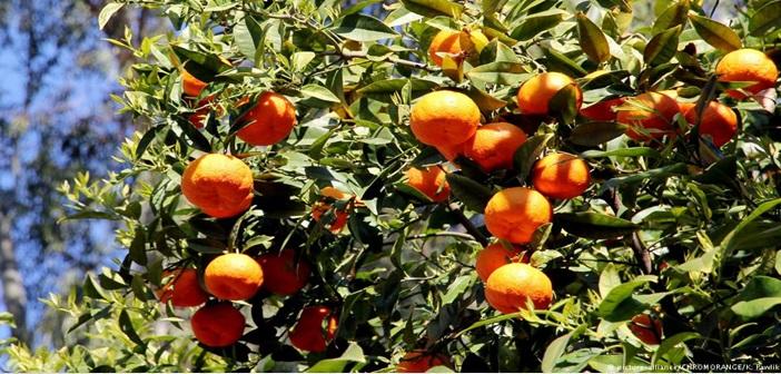 portogalia