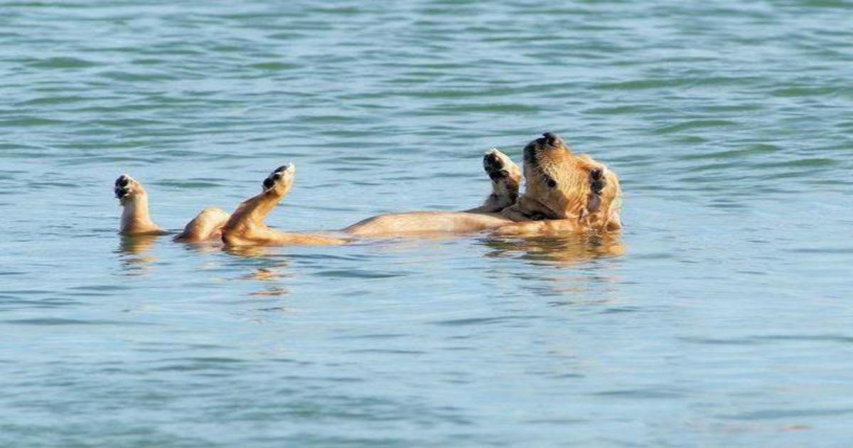 Μπορώ να πάρω τον σκύλο μου στην παραλία για μπάνιο; - Τι ισχύει;