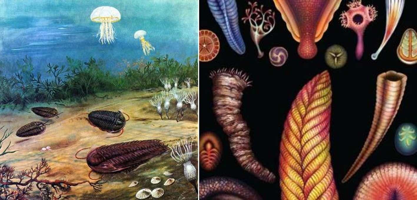 Νέες ανακαλύψεις και τεχνικές αποκαλύπτουν τις ρίζες της «κάμβριας έκρηξης»