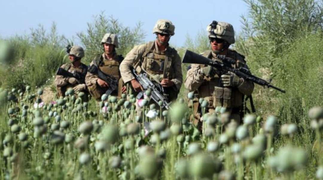 opium afganistan1