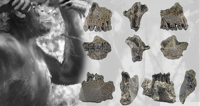 ΠΑΛΑΙΟΑΝΘΡΩΠΟΛΟΓΙΑ: Στη Γερμανία ανακαλύφθηκαν απολιθώματα του ίσως παλαιότερου πιθήκου που περπάτησε όρθιος