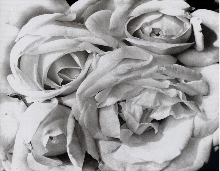 Tina Modotti Τριαντάφυλλα