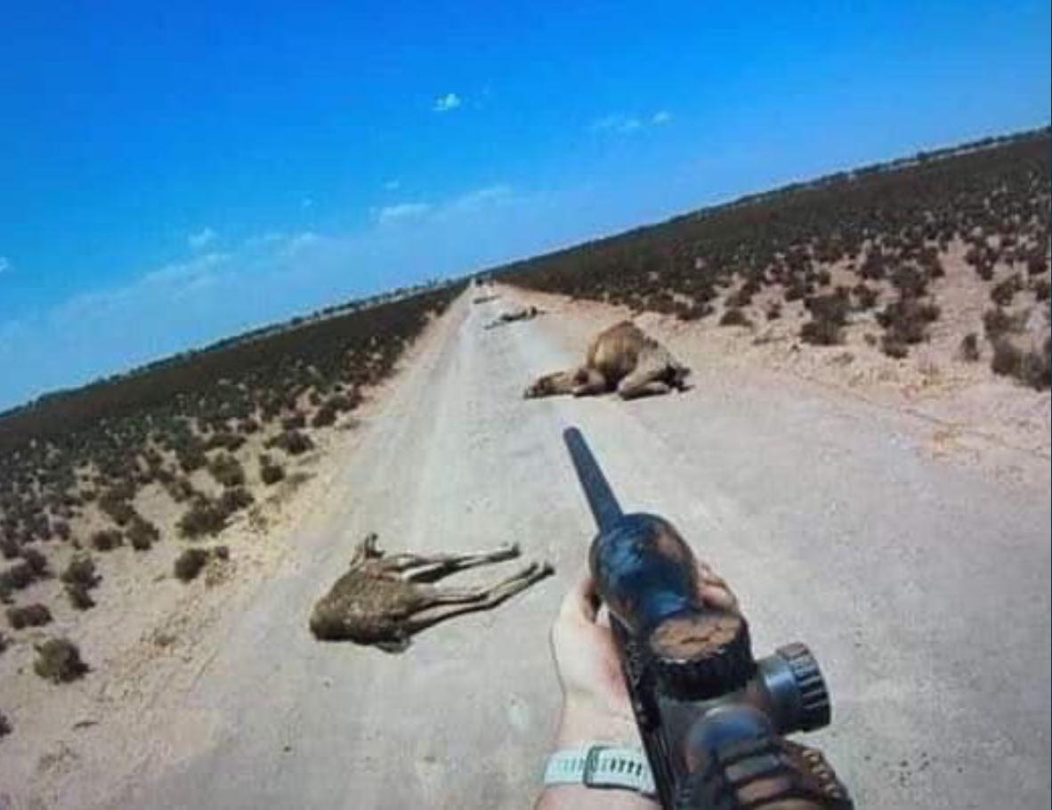 australia camels2