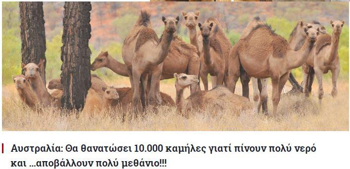 australia camels7