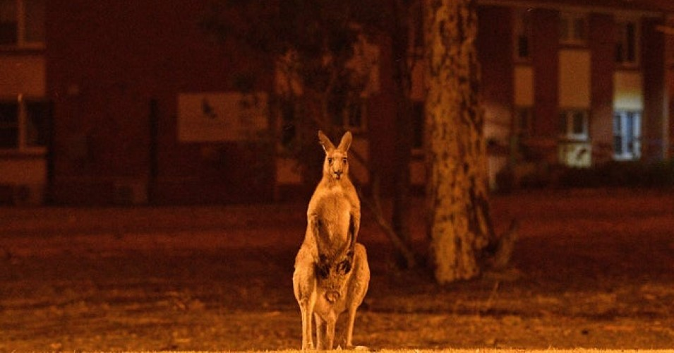 australia fotia6