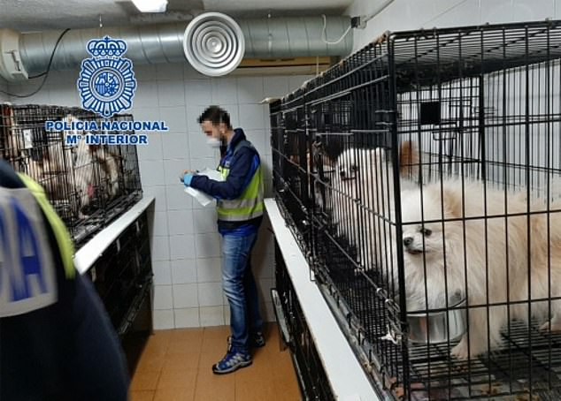 Ποια η αιτία της κτηνωδίας σε βάρος των ζώων; – Έκοψαν τις φωνητικές χορδές από 270 σκυλάκια!!!