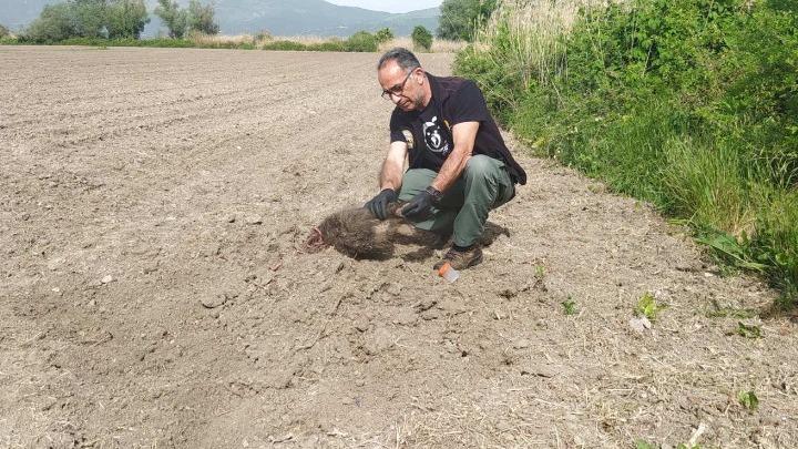 Καστοριά: «Το μεγαλείο της μάνας, το μεγαλείο της φύσης» - H μαμά αρκούδα έθαψε τα δύο μωρά της