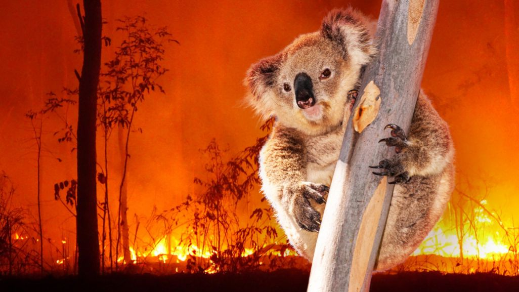 austrralia fire zoo