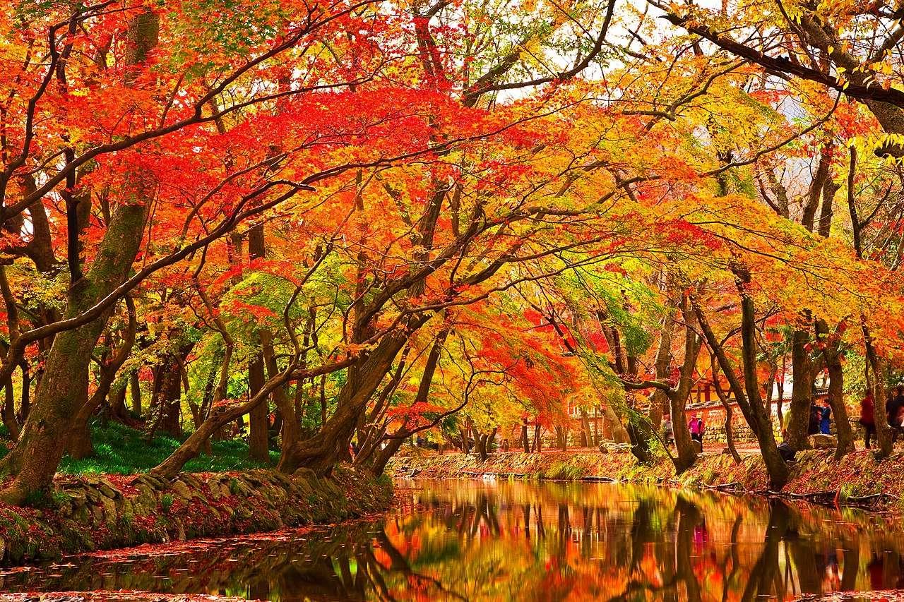 Φθινόπωρο φύλλα σφενδάμου αλλάζουν χρώμα σε ένα ρυάκι