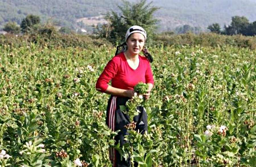 Παγκόσμια Ημέρα Αγρότισσας