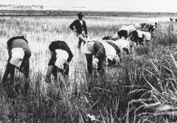 Παγκόσμια Ημέρα Αγρότισσας Mondine