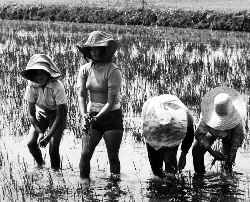 Παγκόσμια Ημέρα Αγρότισσας Mondine 4