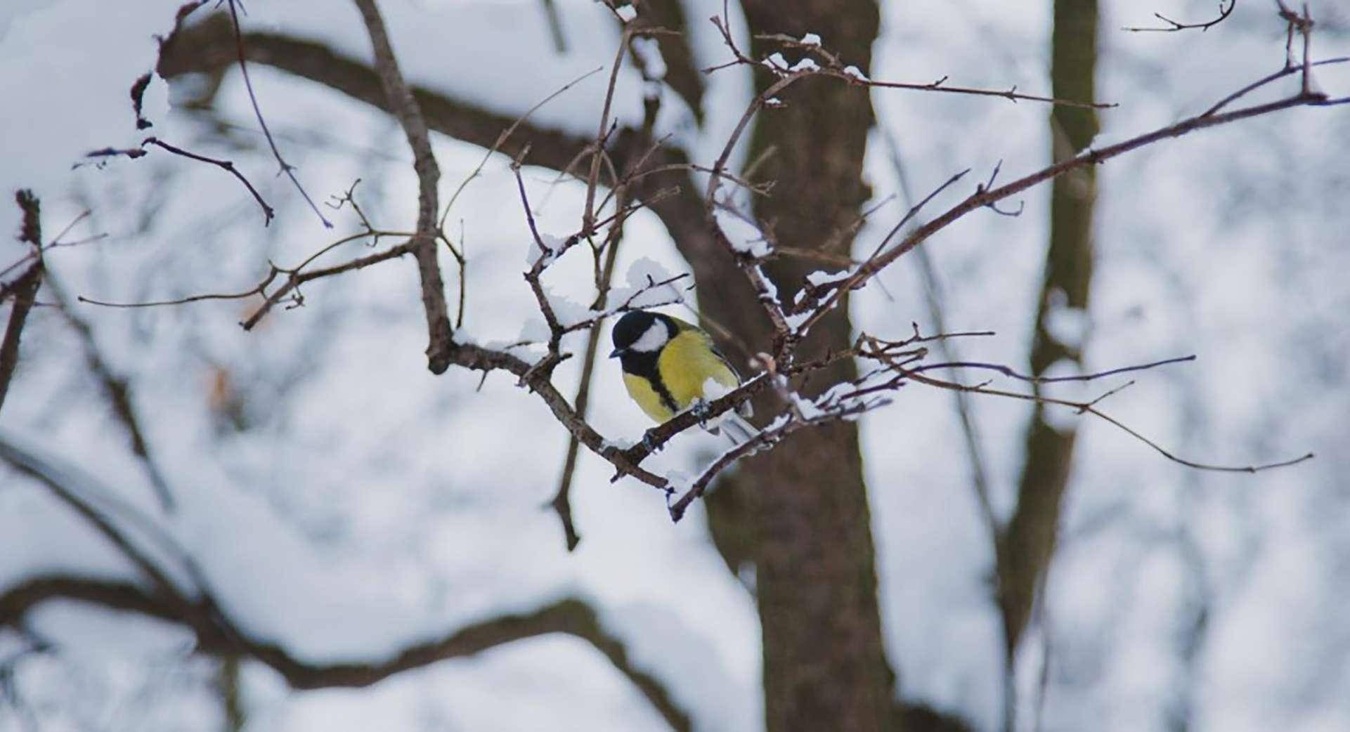 Μήδεια Medea AttikH 16 Feb 2021 bird