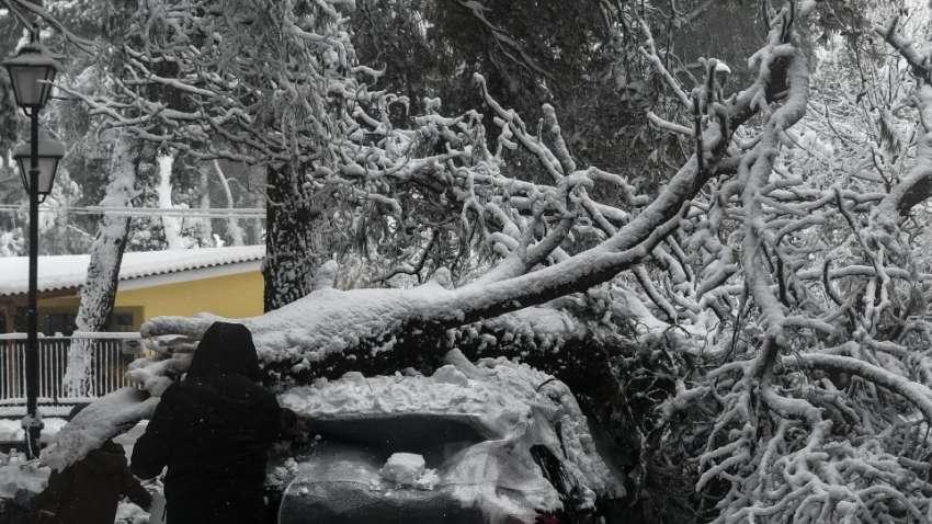 Η χαλέπιος πεύκη και ο χιονιάς