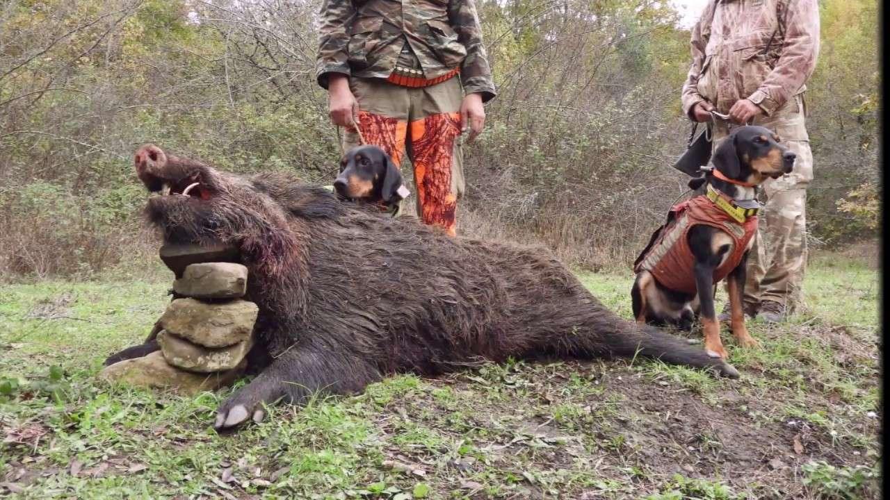 Το κυνήγι και η άρση απαγόρευσης μετακίνησης
