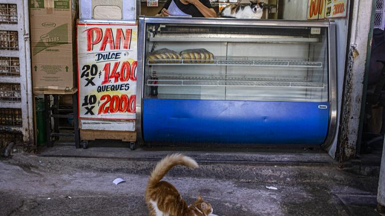 CEPAL America Latina 2021 A cat stretches in front of a bakery at La Vega market in Santiago Chile