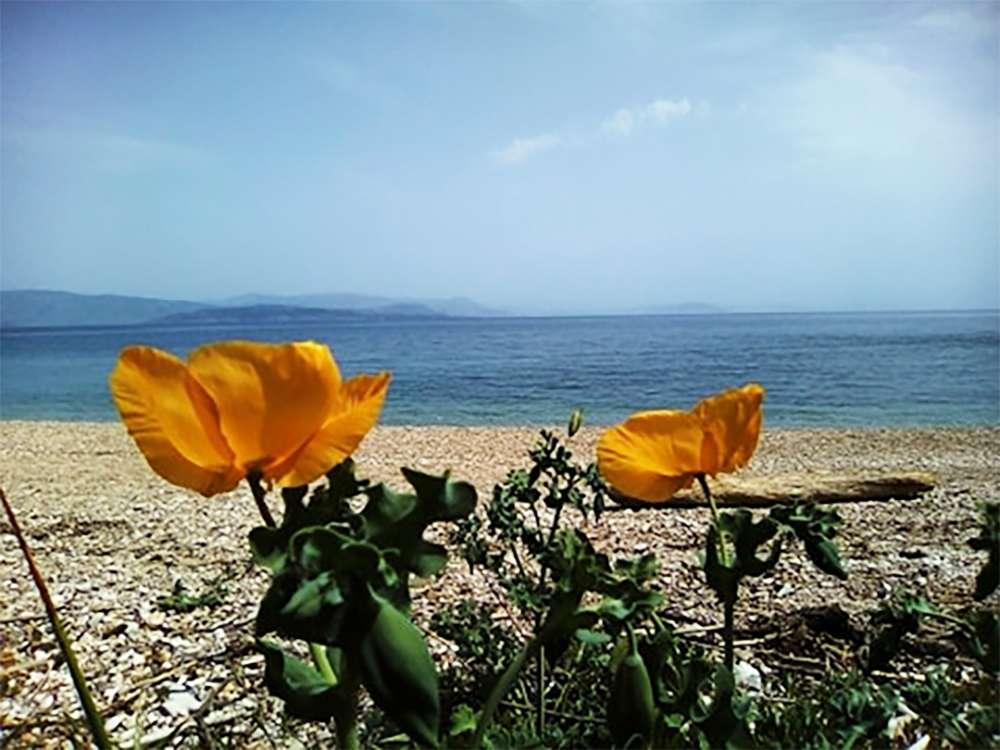 Χ Βερίγου Ζ Δικταίου παραλία