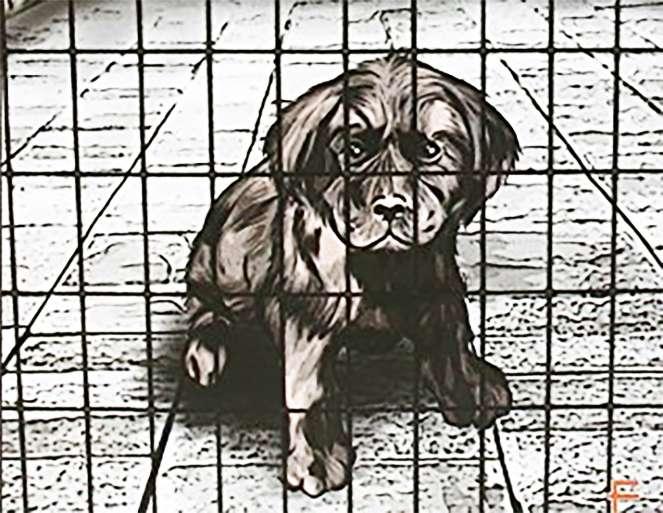 Vita da cane